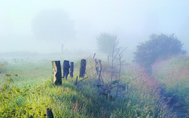 Фото обои трава, деревья, природа, туман, заросли, утро