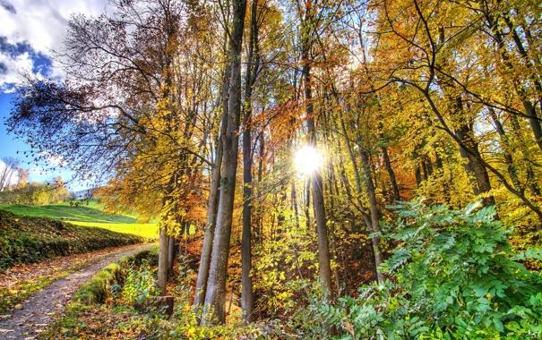 Фото обои дорога, осень, лучи, свет, природа
