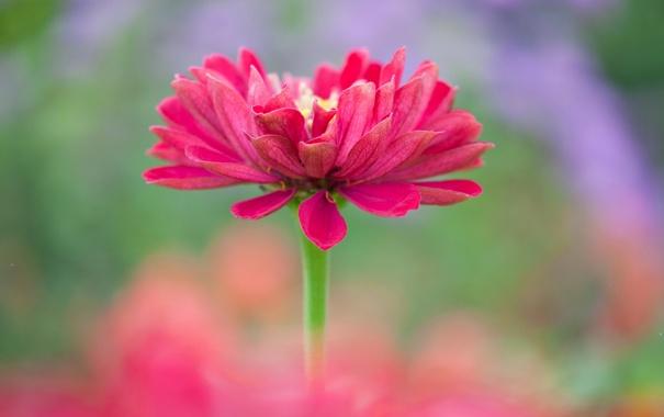 Фото обои цветок, краски, лепестки, стебель