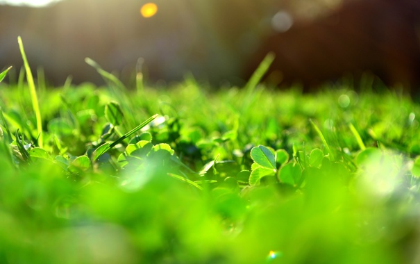 Фото обои зелень, солнце, макро, лучи, свет, блики, Трава