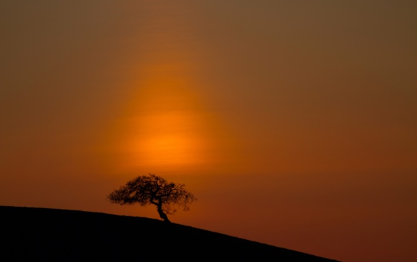 Фото обои море, небо, дерево, склон, зарево