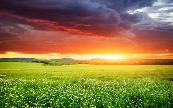 Фото обои поле, небо, трава, закат, sky, landscape, nature