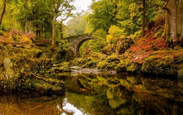 Фото обои осень, лес, деревья, мост, отражение, река