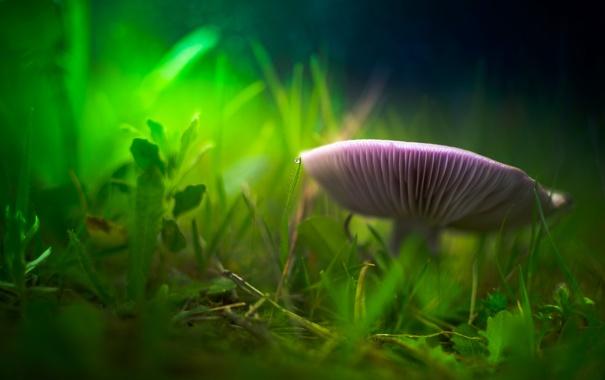 Фото обои трава, гриб, размытость, травинки