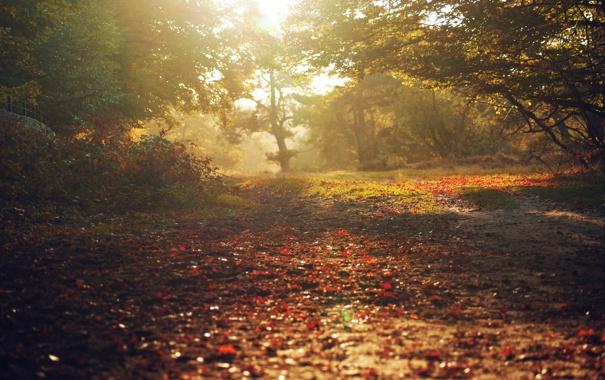 Фото обои осень, листья, лучи, свет, деревья, природа, леса