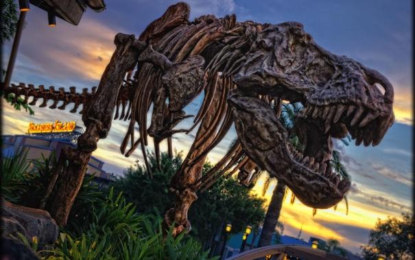 Фото обои динозавр, кости, скелет, photo, photographer, Disneyland, рекс