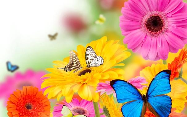 Фото обои цветы, коллаж, бабочка, лепестки, мотыдек