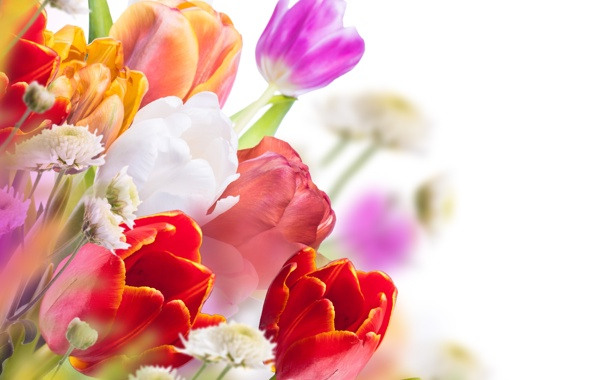 Фото обои цветы, букет, тюльпаны