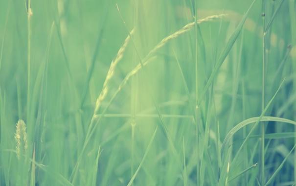 Фото обои трава, макро, размытость, зеленая