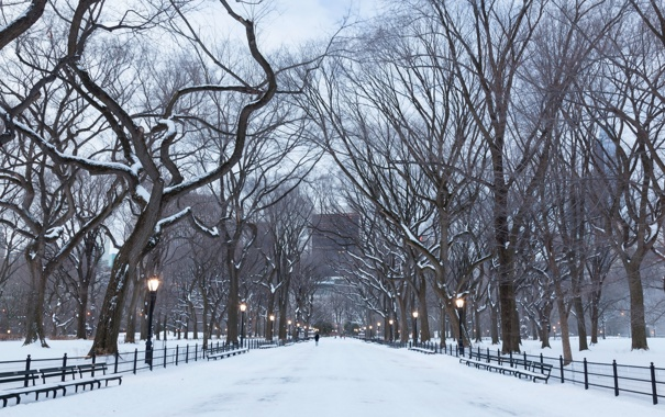 Фото обои manhattan, central park, newyork
