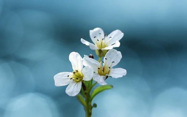 Фото обои макро, цветы, фотографии, красивые обои для рабочего стола
