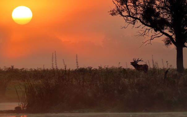 Фото обои закат, туман, озеро, олень