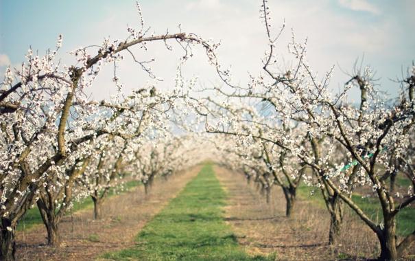 Фото обои сад, весна, природа