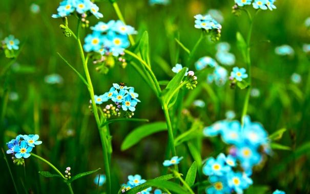 Фото обои природа, цветы, зелень, лето
