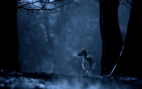 Фото обои лес, деревья, ночь, олень