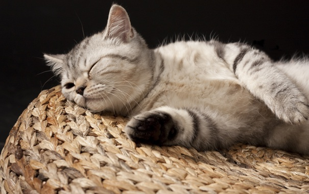 Фото обои маленький, спит, котёнок, полосатый, британец