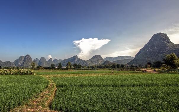 Фото обои поле, облака, горы, фото, люди, работа, пейзажи