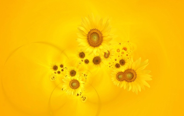 Фото обои цветы, желтый фон, Подсонухи