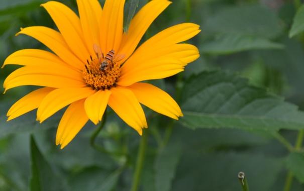 Фото обои цветок, лето, лилия, зеленое, оранжевое
