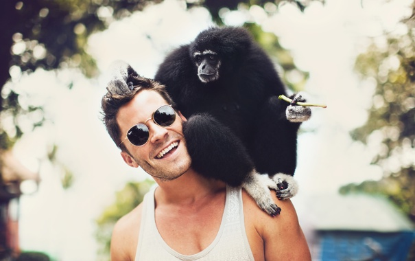 Фото обои monkey, bokeh, animal, Human, natural, touch