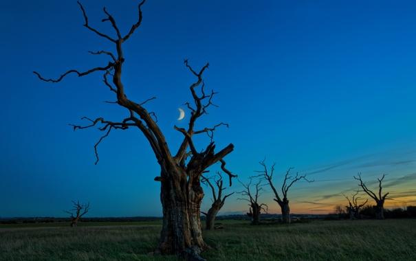 Фото обои дерево, месяц, небо, трава, луна