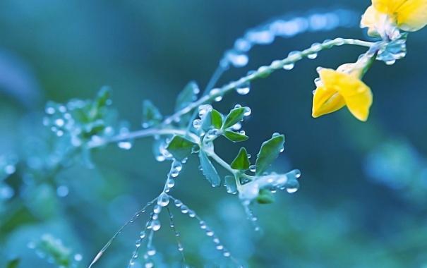 Фото обои цветок, роса, растение