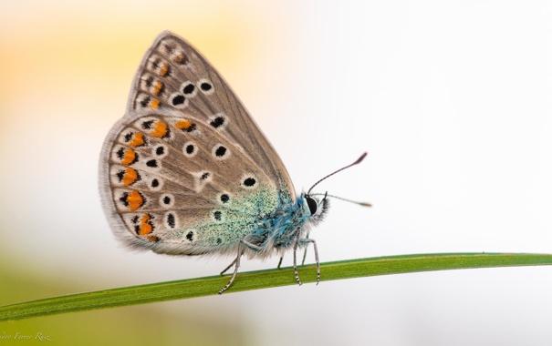 Фото обои цветок, макро, природа, бабочка, насекомое