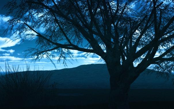 Фото обои небо, облака, закат, горы, дерево, вечер, силуэт