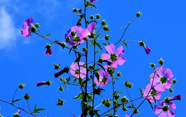 Фото обои небо, цветы, растение