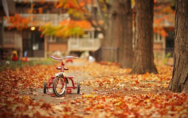 Фото обои листья, деревья, велосипед, парк, Осень