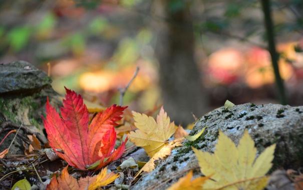 Фото обои осень, лес, листья, камни