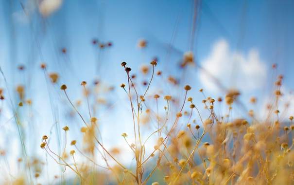 Фото обои небо, макро, цветы