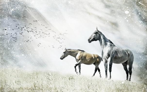 Фото обои природа, стиль, кони