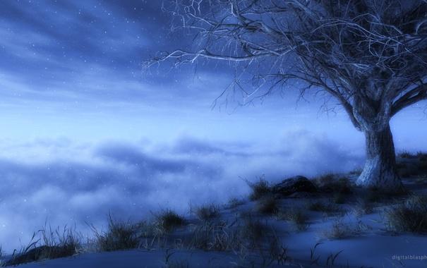 Фото обои небо, дерево, звёзды, сумерки