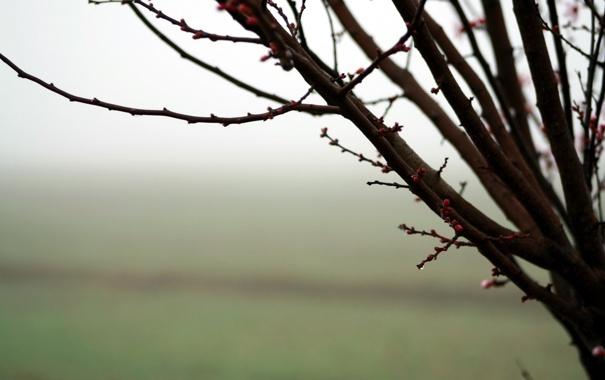 Фото обои макро, природа, дерево