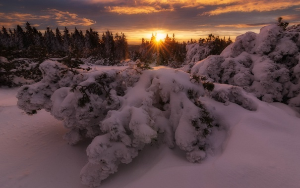 Фото обои зима, лес, снег, деревья, закат, природа
