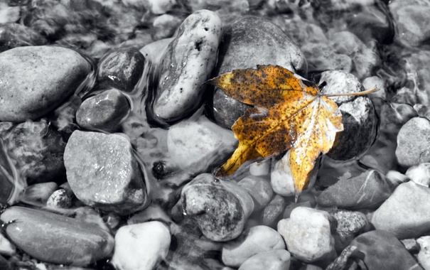 Фото обои осень, вода, природа, лист, камни