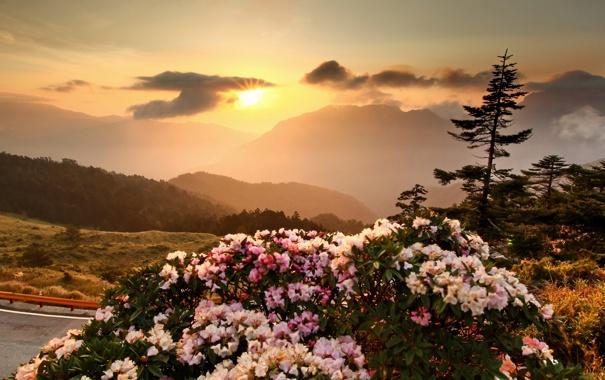 Фото обои небо, пейзаж, закат, цветы, горы