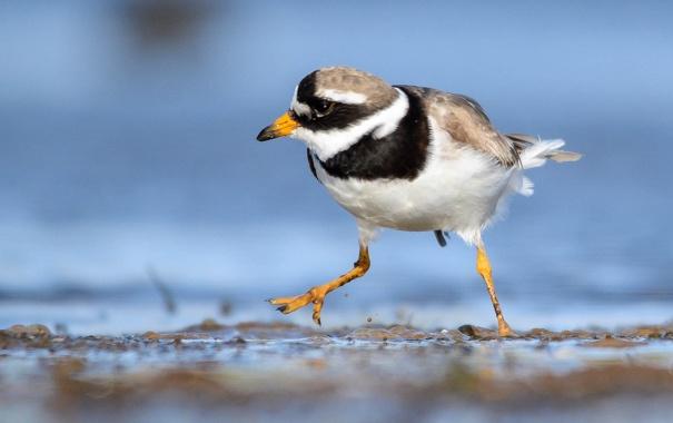 Фото обои вода, природа, птица, клюв