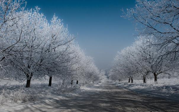 Фото обои зима, дорога, небо, деревья, Снег, мороз
