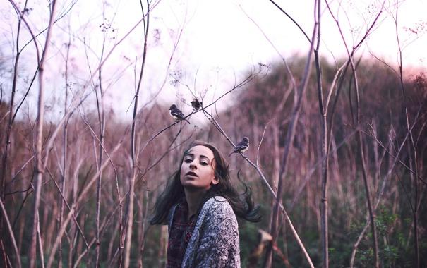Фото обои девушка, птицы, природа, Mockingbirds