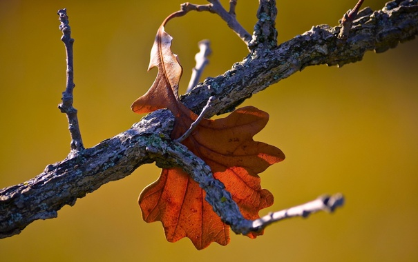 Фото обои осень, листья, макро