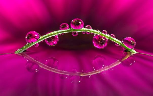 Фото обои цветок, вода, капли, отражение, растение, стебель