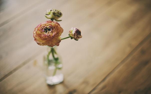 Фото обои цветок, обои, роза, ваза
