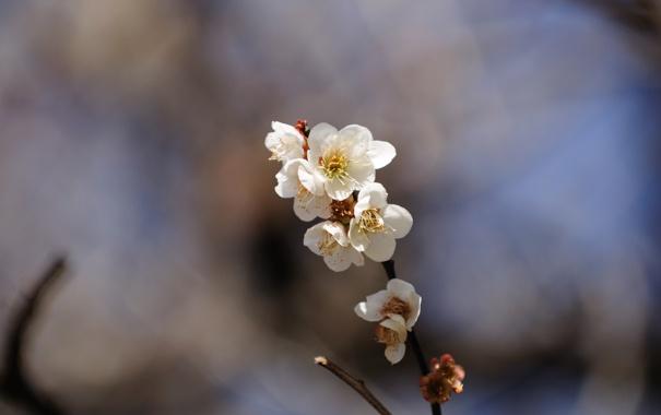 Фото обои цветы, природа, фон, обои, растения, ветка, весна