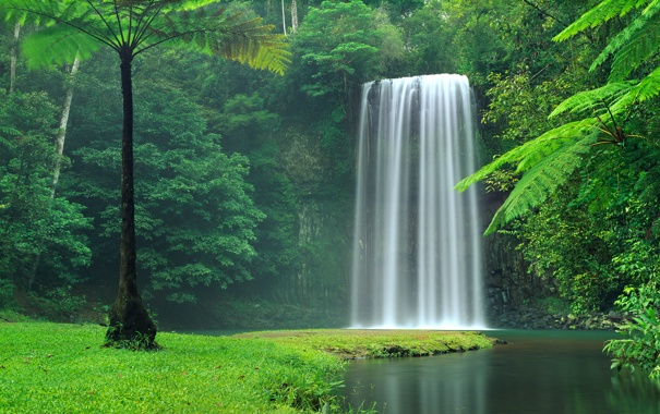 Фото обои лес, деревья, водопад, поток, Австралия