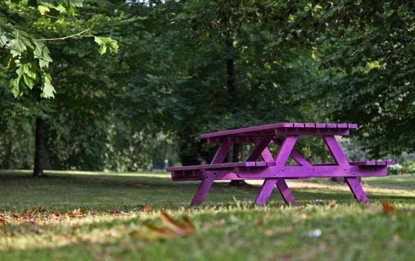 Фото обои макро, скамейка, природа, фиолетовая