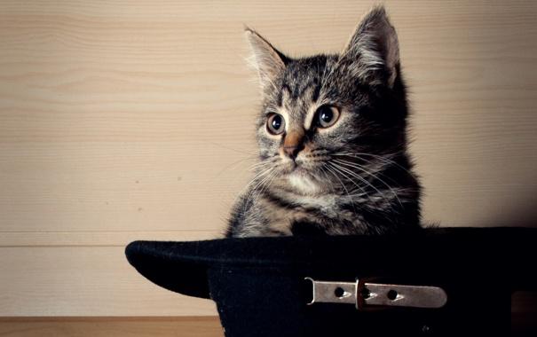 Фото обои усы, котенок, шляпа