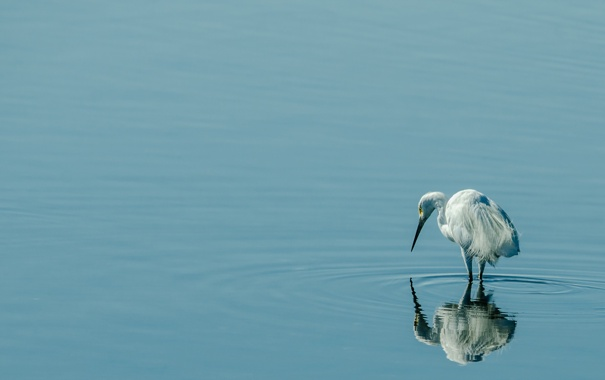 Фото обои природа, птица, вода