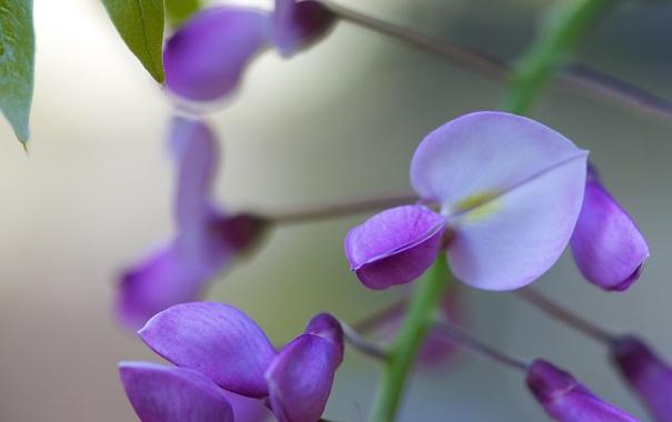 Фото обои природа, дерево, цветки, сиреневые, вистерия